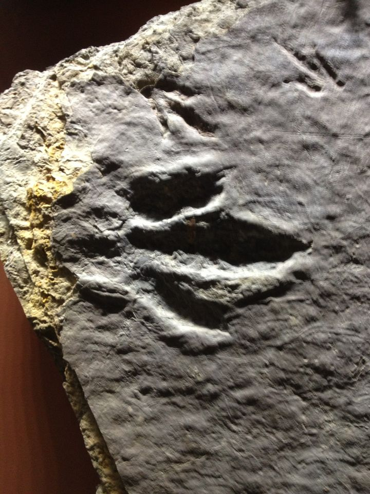 dino footprint2