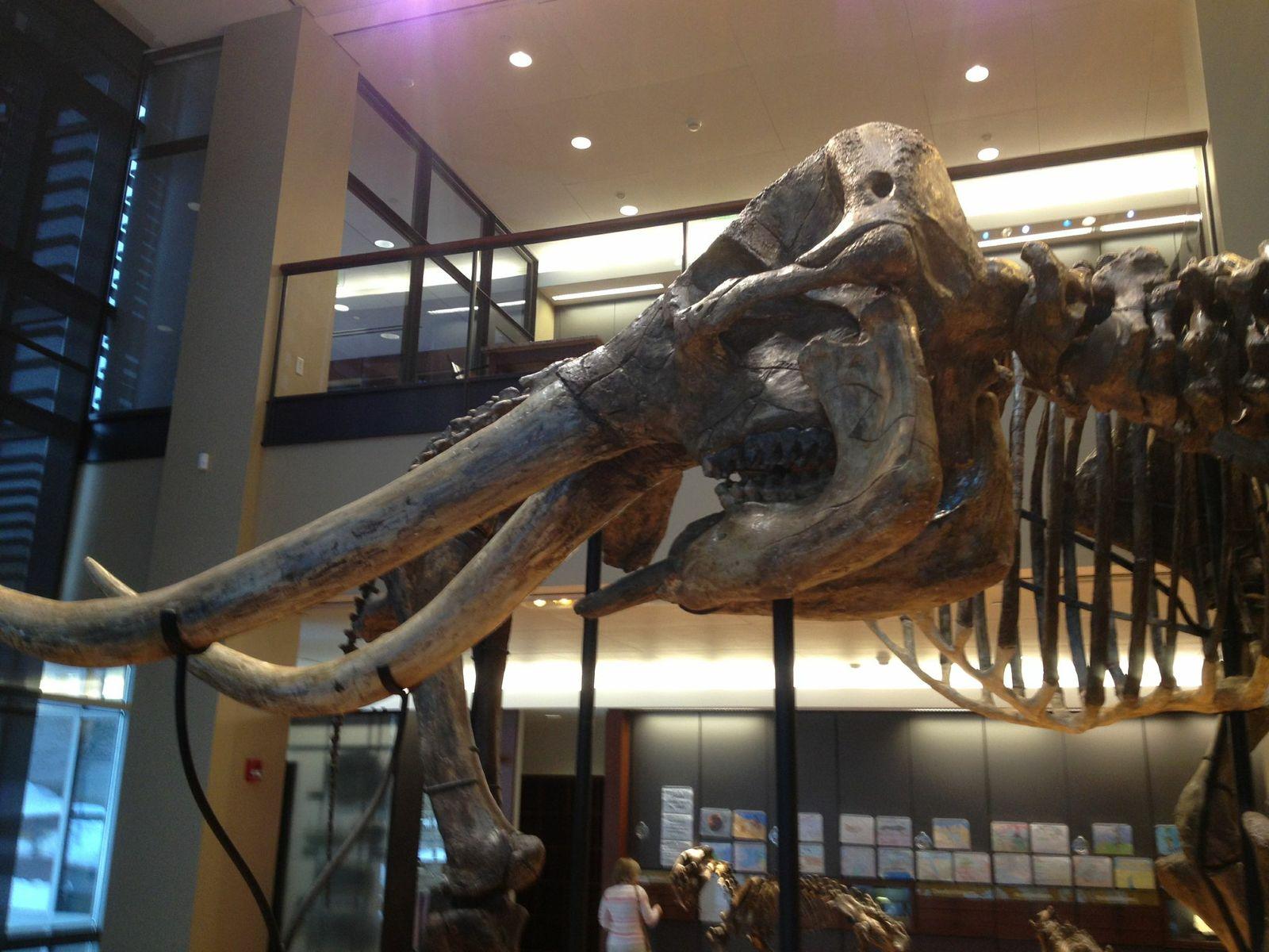 mammoth head