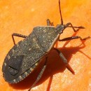 Vegetable Garden Pests