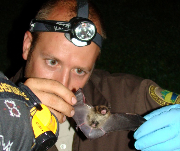 Fort Drum Wildlife Biologist, Chris Dobony, holding a Little Brown Bat.