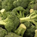 Backers of the new Open Source Seed Initiative will pass out 29 new varieties of fourteen different crops, including broccoli, carrots and kale on Thursday.