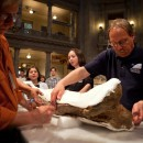 Pat Leiggi, right, of the Museum of the Rockies, prepares to move a leg bone of the T rex at the Smithsonian's Natural History Museum in Washington, D.C. on April 15.
