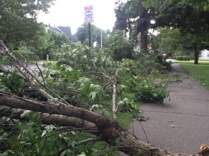 Storm debris in Northampton, Mass.