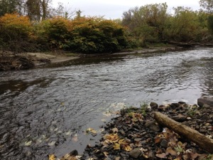 A stretch of the Housatonic River that, under an EPA proposal, would be dredged to remove PCBs. (Photo by Nancy Eve Cohen)