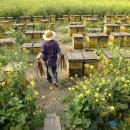 An apiary on the outskirts of Chengdu, China produces about 440 pounds of honey a day. American honey importers say they suspect the uptick in honey coming from Turkey actually originated in China.